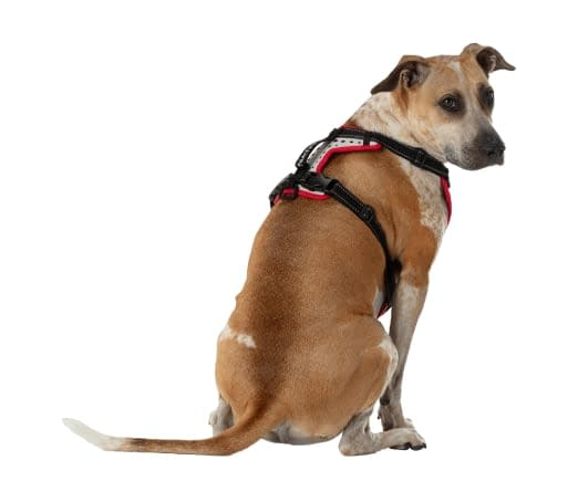 dog harness breathable